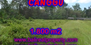 Terrific Property in Bali, Land for sale in Canggu Bali – 1,800 sqm @ $ 594