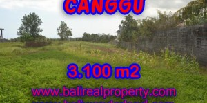 Land for sale in Bali, Exotic view in Canggu Bali – 3,100 sqm @ $ 539