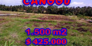 Land in Bali for sale, Excellent Property in Canggu Bali – 1.500 sqm @ $ 283