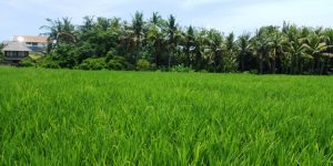 Land for sale in Bali 2,000 sqm Close to The Beach  in Canggu