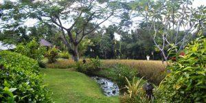 Land for sale in Canggu Bali  nice view in Canggu