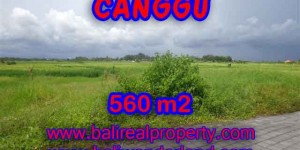 Land in Canggu for sale, Amazing view in Canggu Cemagi Bali – TJCG138
