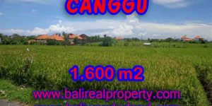 Exotic LAND FOR SALE IN CANGGU Bali, Paddy view closed to the beach in Canggu Cemagi – TJCG139