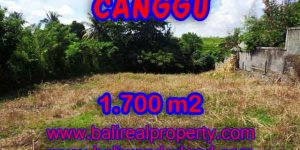 Land in Canggu for sale, Stunning view in Canggu Pererenan Bali – TJCG143