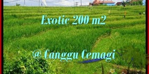 200 m2 LAND FOR SALE IN Canggu Cemagi BALI TJCG170