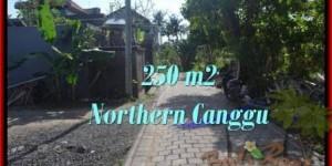 250 m2 LAND IN Canggu Pererenan BALI FOR SALE TJCG182