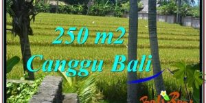 Exotic PROPERTY 250 m2 LAND SALE IN Canggu Pererenan BALI TJCG207