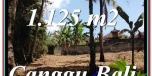 Beautiful CANGGU BALI LAND FOR SALE TJCG208