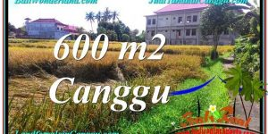 Magnificent 600 m2 LAND SALE IN Canggu Pererenan TJCG211
