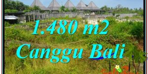 Beautiful PROPERTY 1,480 m2 LAND SALE IN Canggu Pererenan BALI TJCG212