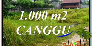 Exotic PROPERTY LAND SALE IN CANGGU BALI TJCG214