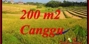 Magnificent PROPERTY CANGGU BALI 200 m2 LAND FOR SALE TJCG228