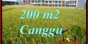 Beautiful PROPERTY 200 m2 LAND SALE IN CANGGU BALI TJCG229